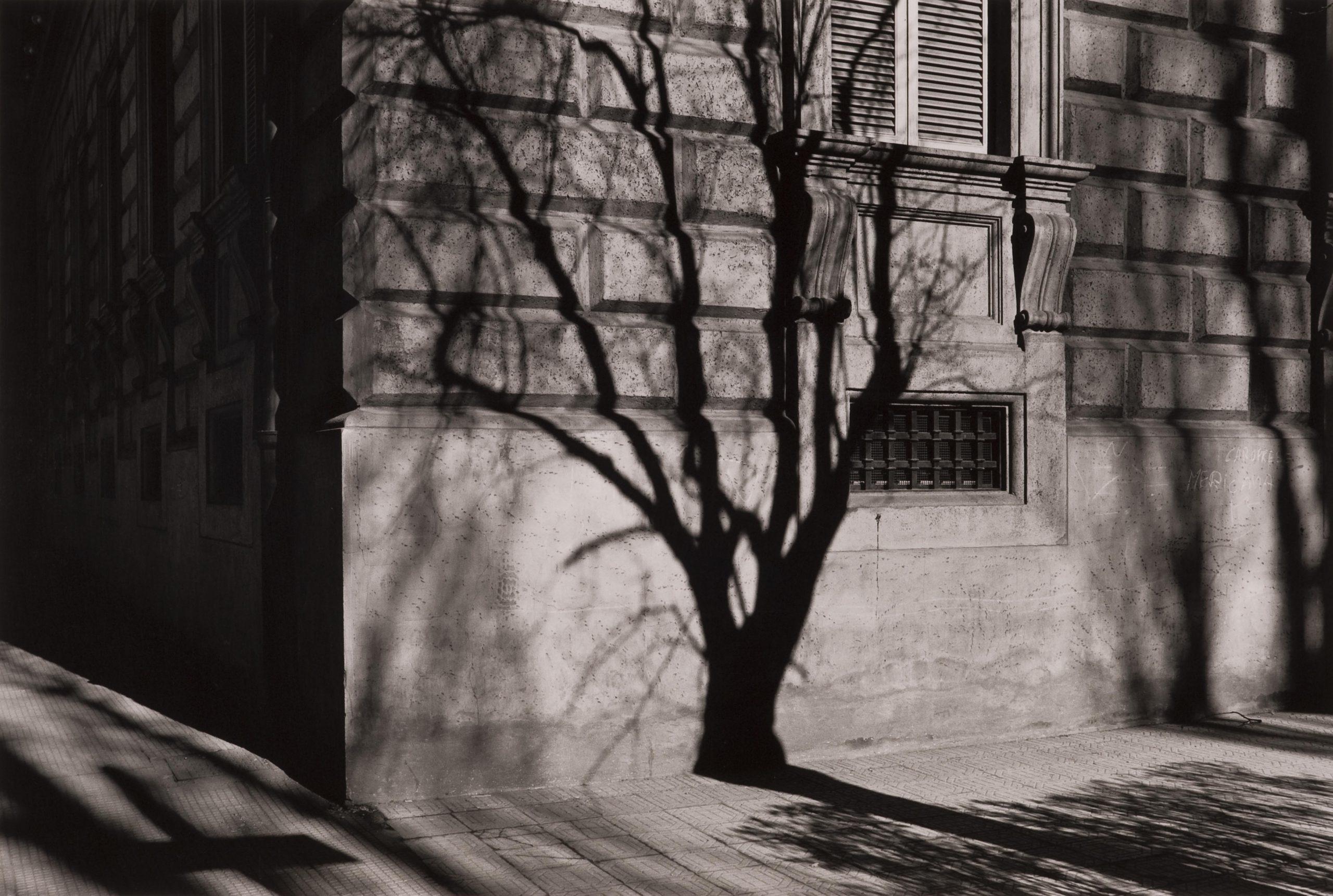 Radino, Francesco 19